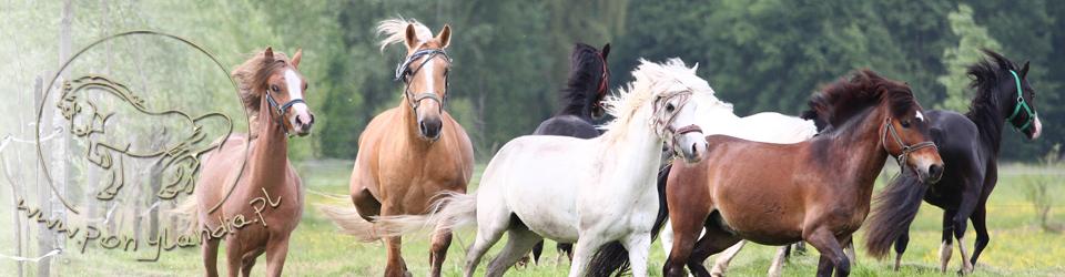 Sportowy Klub Jeździecki Ponylandia